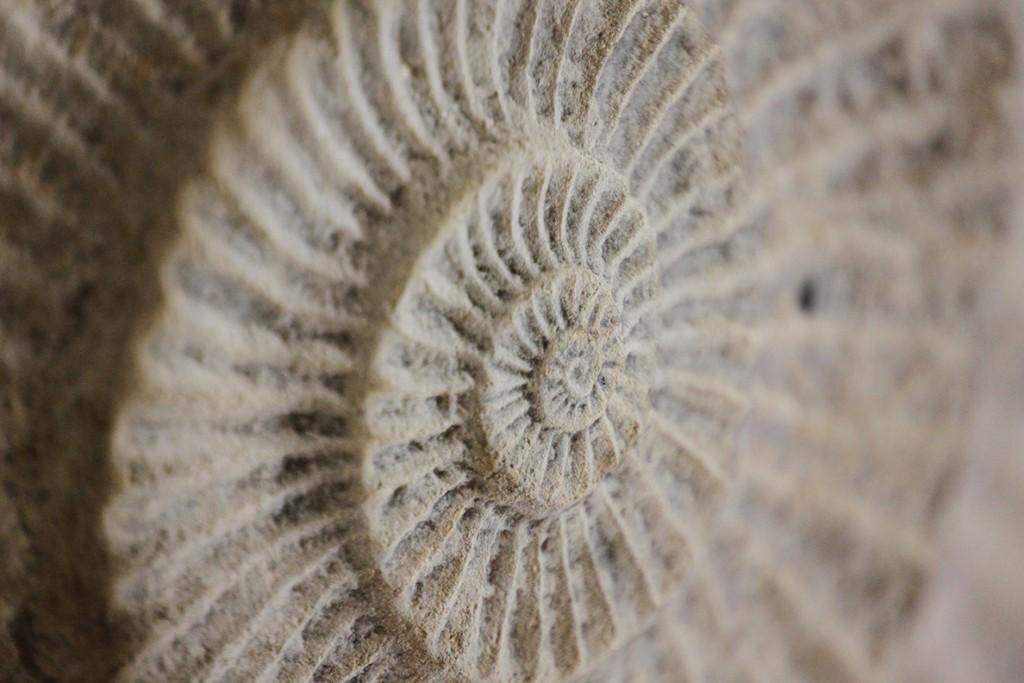 Fossile de Meschers aux grottes de Matata