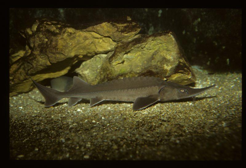 L'écomusée des Grottes de Matata : les aquariums