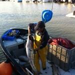 Pêche au maigre - Port de Meschers