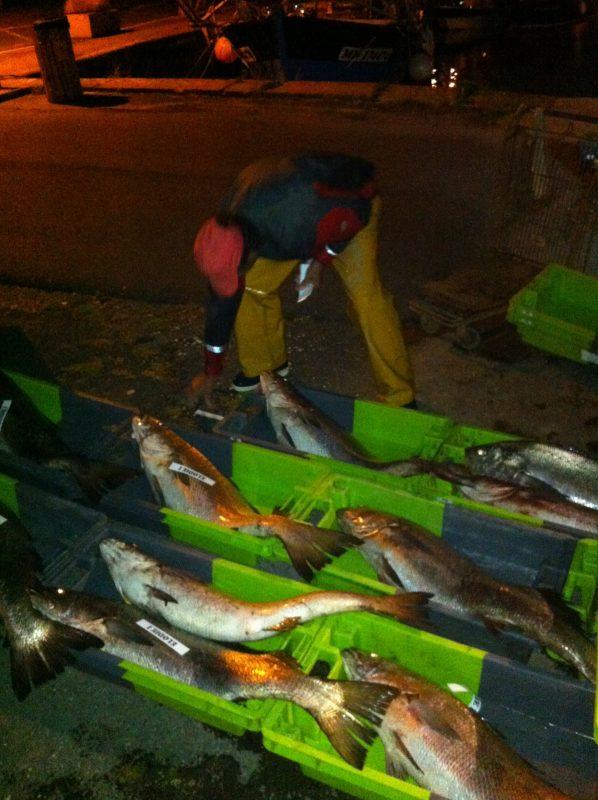 Retour de pêche au maigre - Port de Meschers