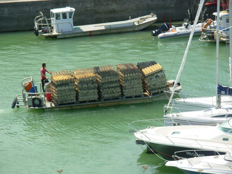 Barges à huîtres - Île d'Oléron